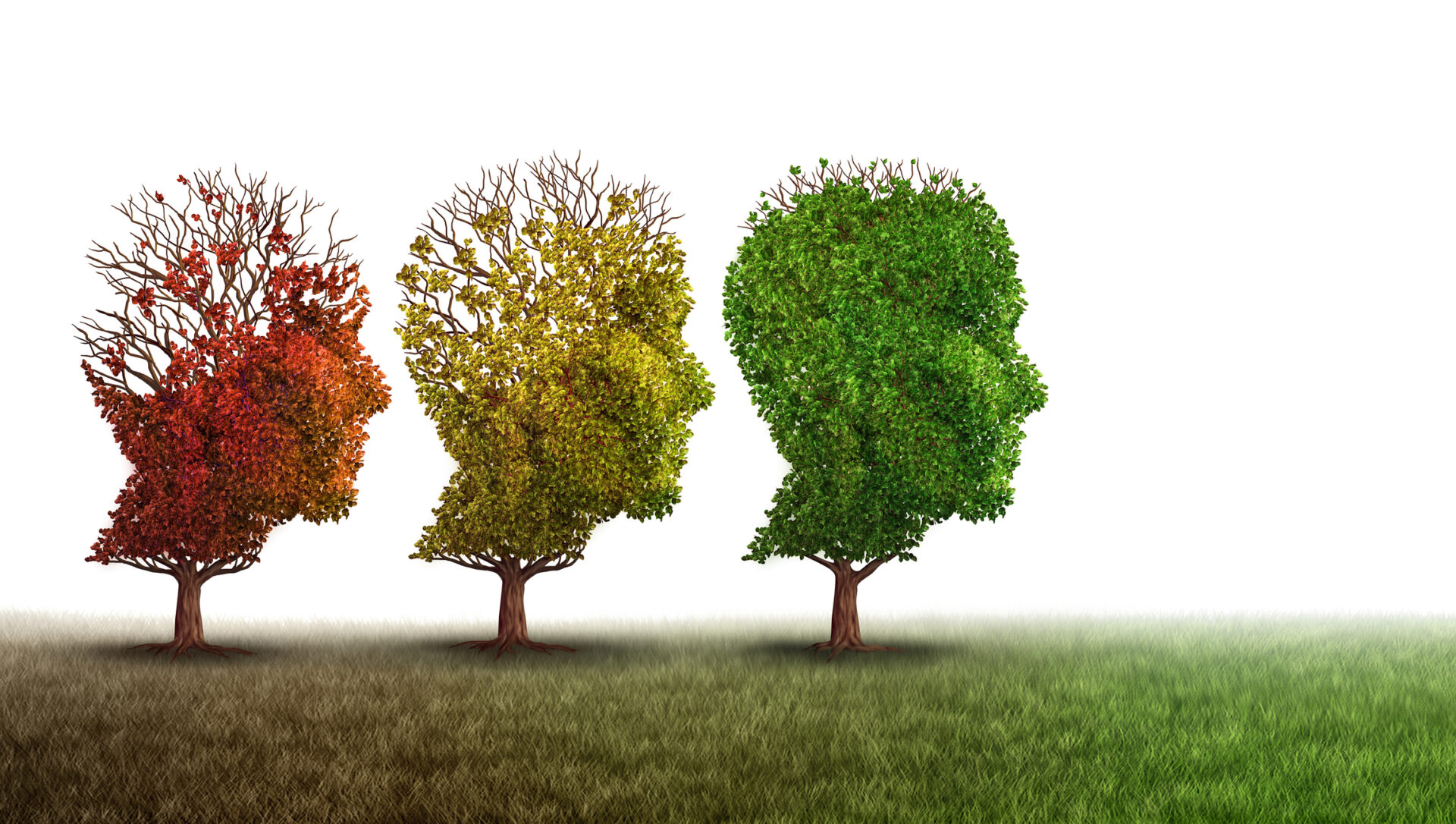 a concept of deteriorating memory using trees losing leaves as an analogy
