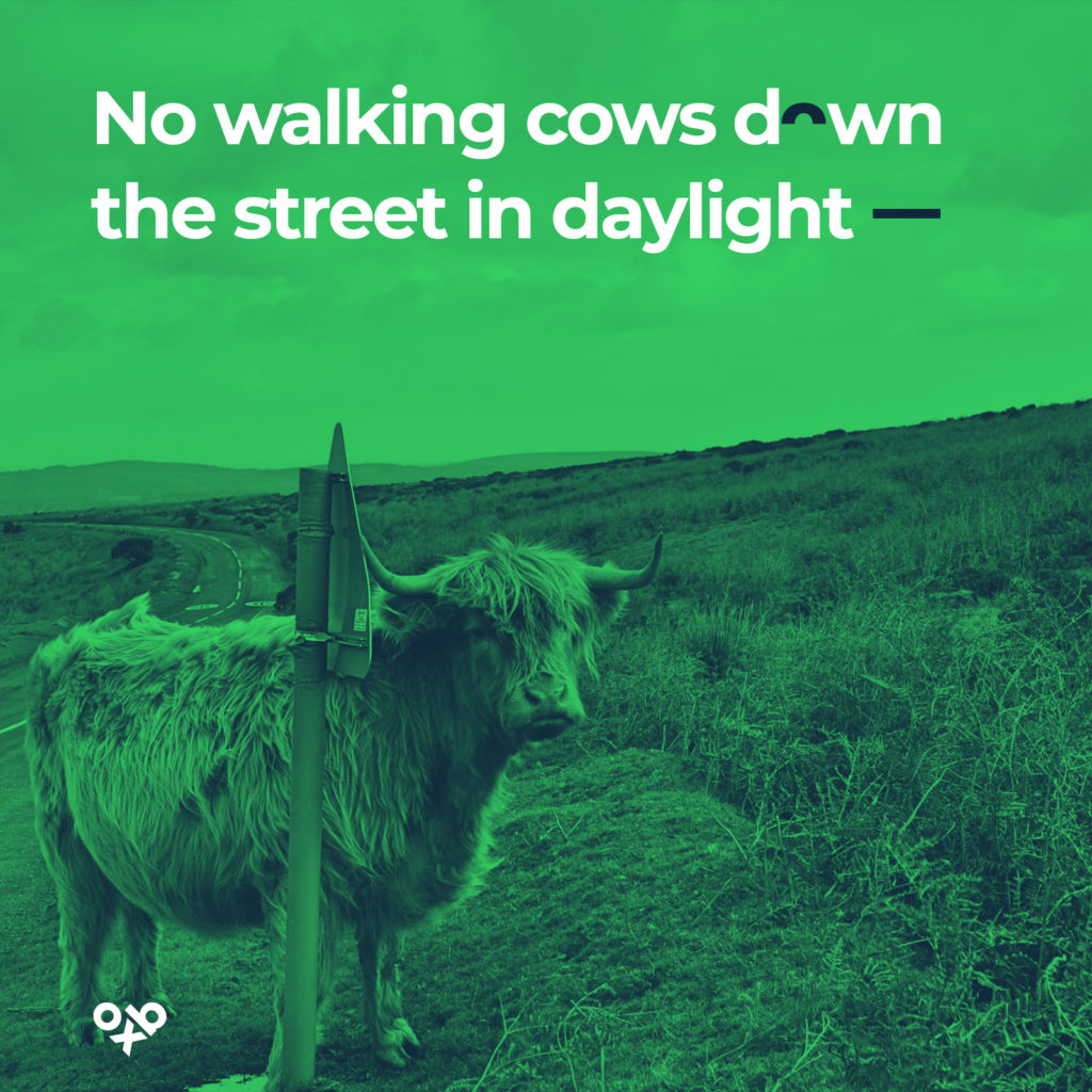 no walking cows down the street in daylight