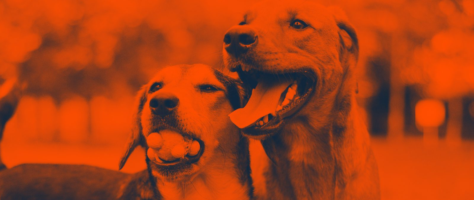 most-adopted-dog-breeds
